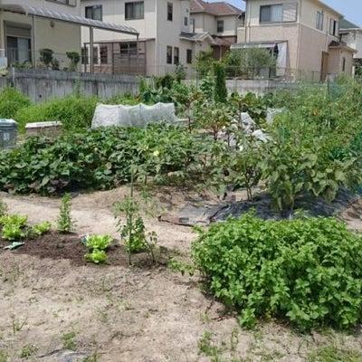 ド素人の夫婦が引き継いた母の庭の画像