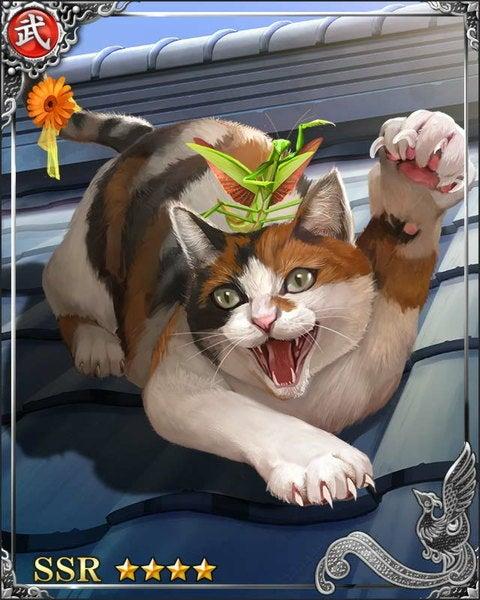 [鍛練忠猫]花子の画像